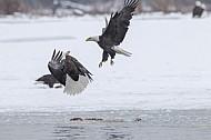 2012 American Bald Eagle Festival