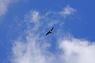 Conowingo Dam Eagles