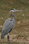 Norfolk Botanical Garden Wildlife